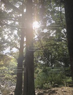 樹木と陽の光の写真・画像素材[3717232]