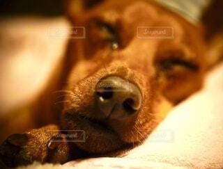 Baby's sleeping faceの写真・画像素材[3721072]