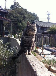 猫の写真・画像素材[155898]