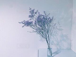 儚い紫色のお花の写真・画像素材[3821431]