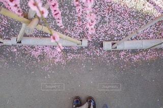 花びらでピンクの地面と女性の足の写真・画像素材[3821516]