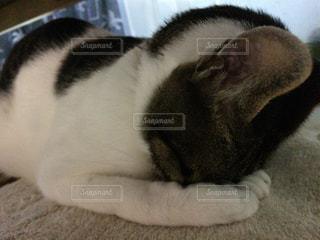 猫の写真・画像素材[156006]