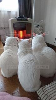 ストーブにあつまる猫の写真・画像素材[3708095]
