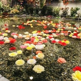 カラフルな花の写真・画像素材[3707815]