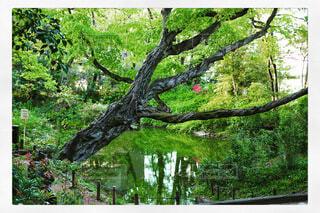都会の公園の写真・画像素材[3707879]