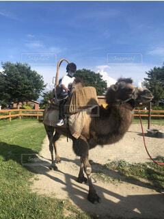 馬に乗っている人の写真・画像素材[3711609]