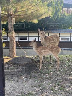 鹿さんの写真・画像素材[4771969]