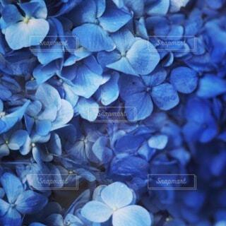 花のクローズアップの写真・画像素材[3712227]