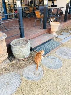 猫がいるカフェの写真・画像素材[3715259]
