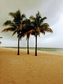 ヤシの木の隣の砂浜の写真・画像素材[3714831]