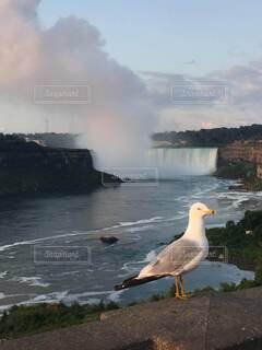 ナイアガラの滝と水鳥の写真・画像素材[3714884]