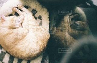 反射するネコの写真・画像素材[3717962]