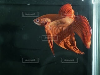 水の下で泳ぐ魚の写真・画像素材[3719954]