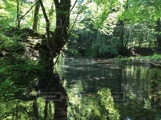 森林地帯を流れる川の写真・画像素材[3722459]