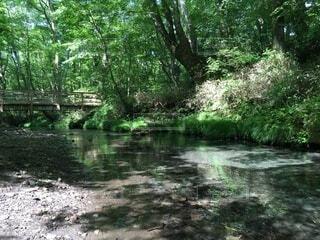 森林の川にかかる橋の写真・画像素材[3722457]