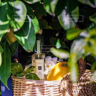 香水のクローズアップの写真・画像素材[4391807]