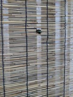 簾を登るコガネムシの写真・画像素材[3724901]