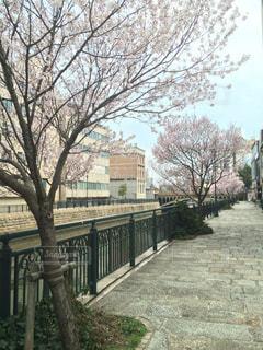 桜 - No.316490