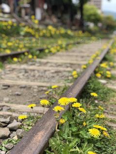 花の写真・画像素材[2146115]