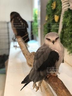 テーブルの上に座っている鳥の写真・画像素材[3491152]