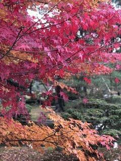 木のクローズアップの写真・画像素材[3624288]