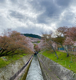 木の隣の列車の線路を下って移動する列車の写真・画像素材[4307654]