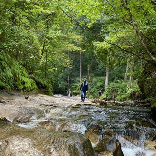 森の中に滝のある男の写真・画像素材[4802496]