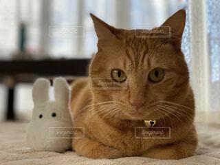 猫のクローズアップの写真・画像素材[3814184]