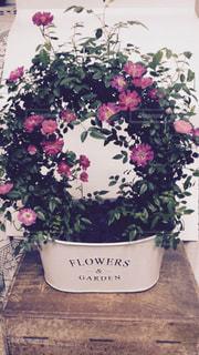 花の写真・画像素材[170734]
