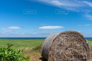 干し草だらけの畑の写真・画像素材[3766851]