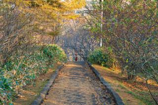 紅葉が深まる秋の公園の道の写真・画像素材[3868898]