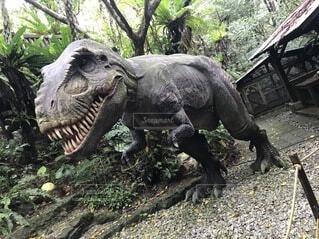 恐竜のクローズアップの写真・画像素材[3733029]