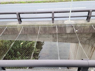 橋の写真・画像素材[3786229]