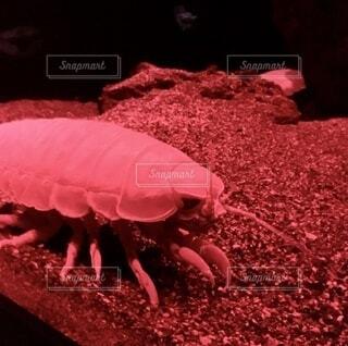 深海生物のクローズアップの写真・画像素材[3729946]