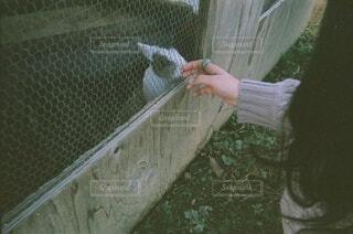 触れ合いの写真・画像素材[3935257]