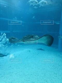 水の下で泳ぐ魚 エイ 水族館 海の写真・画像素材[3734197]
