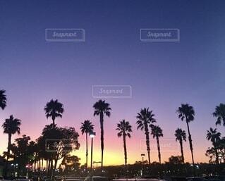 背景に夕日のあるヤシの木のグループの写真・画像素材[3735706]