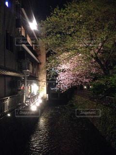 桜の写真・画像素材[159106]