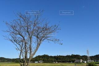 青空と枯れ木の写真・画像素材[3822709]