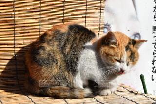 日向ぼっこをしている猫の写真・画像素材[3911059]