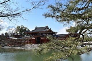 松の木と平等院と冬の空の写真・画像素材[3911304]