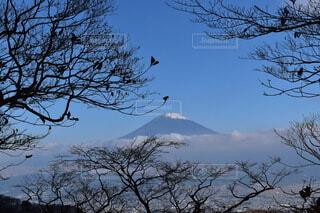 金時山山中から望む富士の写真・画像素材[3911342]