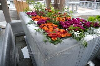手水舎の花の写真・画像素材[3739381]