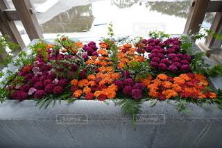 手水舎の花の写真・画像素材[3739380]