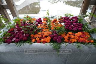 手水舎の花の写真・画像素材[3739388]