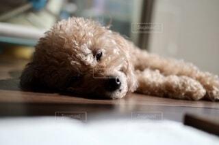 犬のクローズアップの写真・画像素材[3740202]