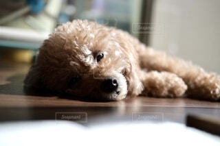 犬のクローズアップの写真・画像素材[3740206]