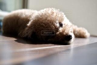 犬のクローズアップの写真・画像素材[3740207]