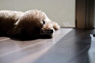 横たわっている犬の写真・画像素材[3740203]