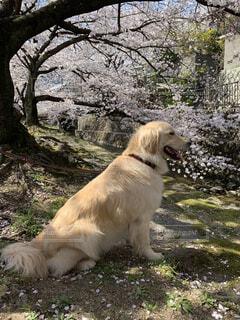 お花見するワンコの写真・画像素材[3741139]